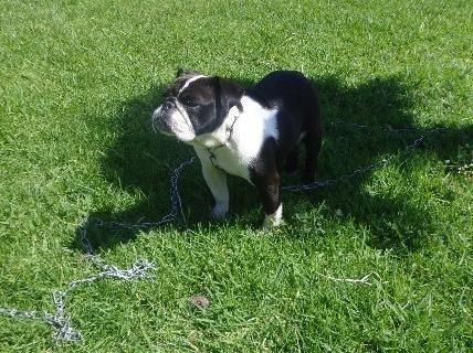 Pets And Animals For Sale In National City California Puppy And