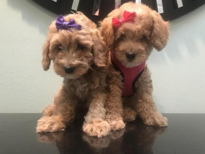 Pets And Animals For Sale In Jupiter Florida Puppy And Kitten