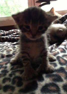 Pet adoption contract legal