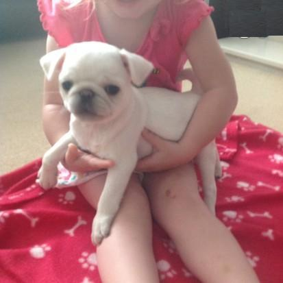 Fabulous Pug Puppies For Rehoming For Sale In Atlanta Georgia