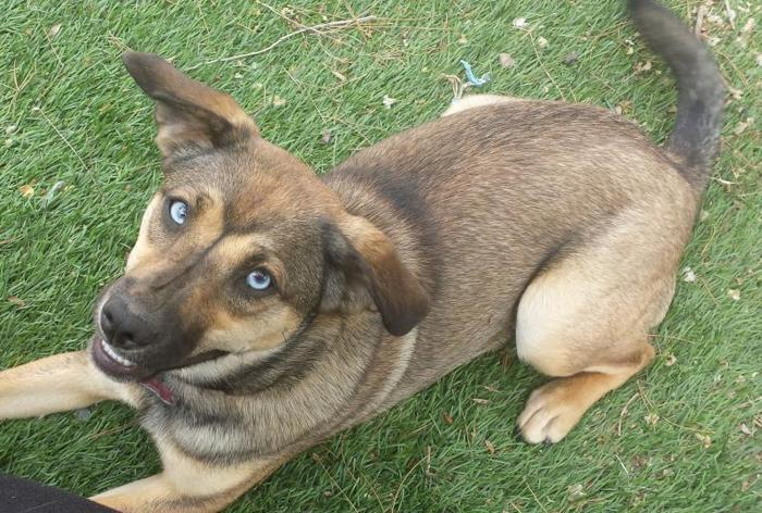 pets and animals for sale in hi vista california puppy and kitten