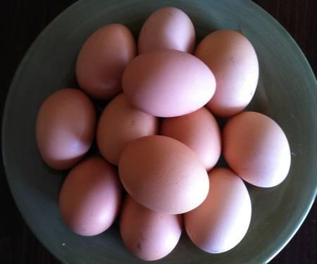 Fertilized Chicken Eggs - Fertile Eggs For Hatching