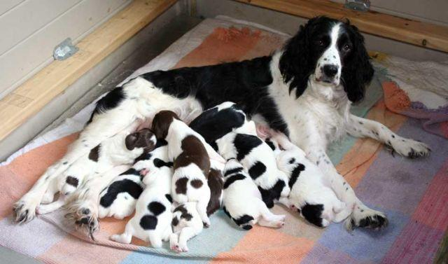 Pets And Animals For Sale In Jaffrey New Hampshire Puppy And