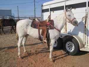 FINISHED Roping horse - (Borger) for Sale in Amarillo, Texas