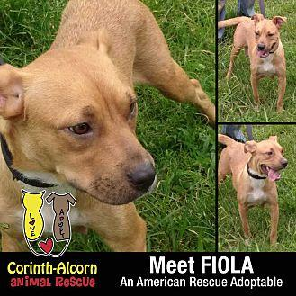 FIOLA Terrier (Unknown Type, Medium) Young Female