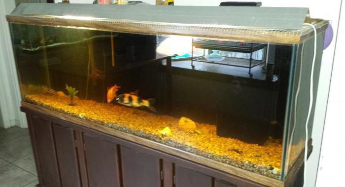 Fish And 2 Tanks