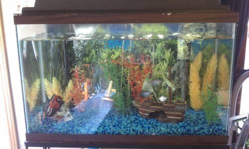 Freshwater Fish Tank Maintenance York 2017 Fish Tank