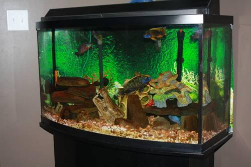 Fish tank 46 gallon bow front w stand and fish for sale in for Bow front fish tank