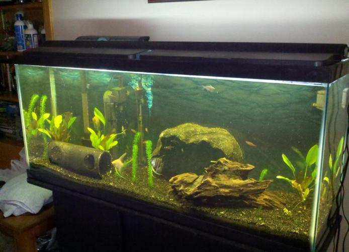 Fish Tank 55 Gallon Aquarium Fish Amp Everything You Need