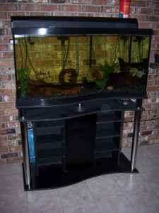 Fish tank-my 95 gal wavefront All-Glass aquarium &