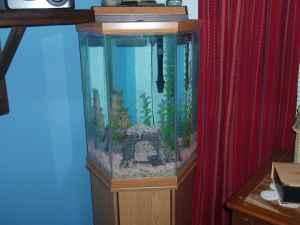 Fish Tank w/cabinet - Octagon 35 gal - $125 (Orange