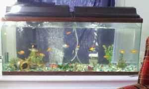 For sale 55 gallon fish tank norwich ny for sale in for 200 gallon fish tank for sale