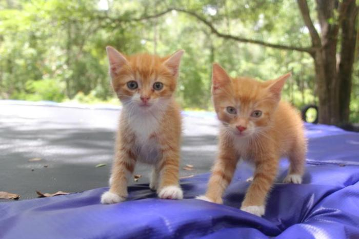 Free Kittens for Sale in Dunnellon, Florida Classified