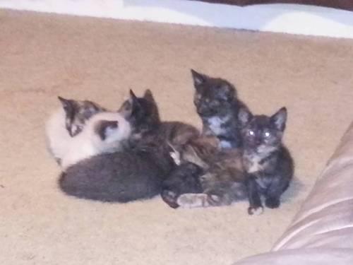 Free Kittens!!!!!!
