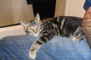 free kittens (medford)