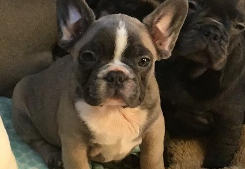 Pets And Animals For Sale In Stratford Wisconsin Puppy And Kitten