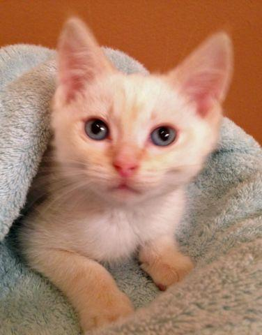 free kittens in tennessee
