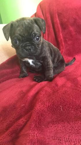 Pets And Animals For Sale In Denton North Carolina Puppy And