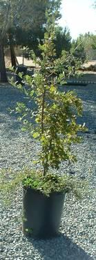 FRUIT TREES AND AVOCADO TREES ON SALE