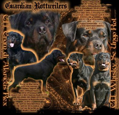 Germaneuropean Import Rottweilers For Sale In Bargersville Indiana