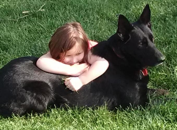 German Shepherd Puppies For Sale In Peoria Illinois Classified