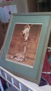 Giraffe love picture - $5 tuscaloosa