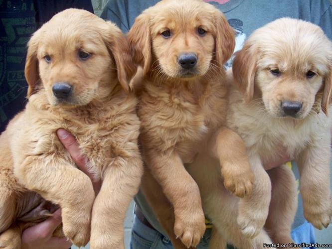 Pets And Animals For Sale In Weston Wisconsin Puppy And Kitten