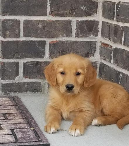 Pets And Animals For Sale In Greenwood Indiana Puppy And Kitten