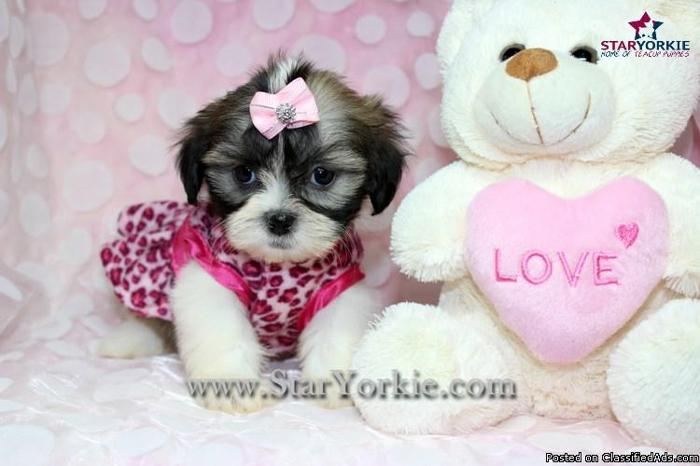 Shih tzu puppies las vegas for sale