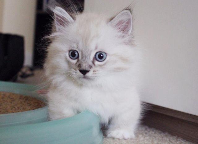cashmere cat interview