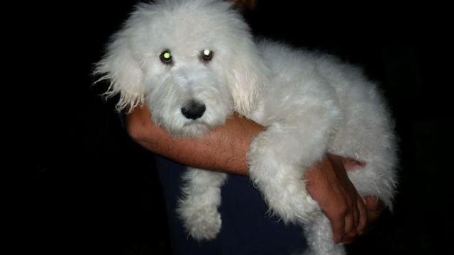 Small Dog Breeders Around Mansfield Ohio