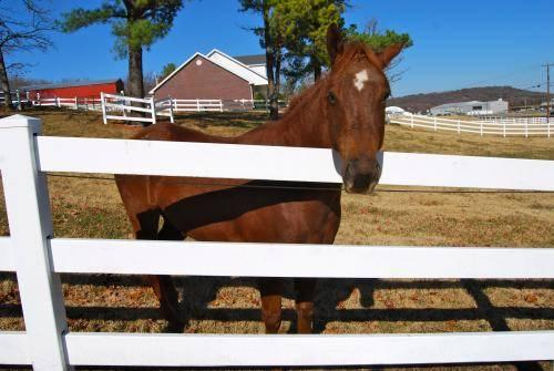 Grade - Ellie - Large - Adult - Female - Horse