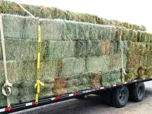 GRASS/ALFALFA MIX - $11 (PARKER,CO)