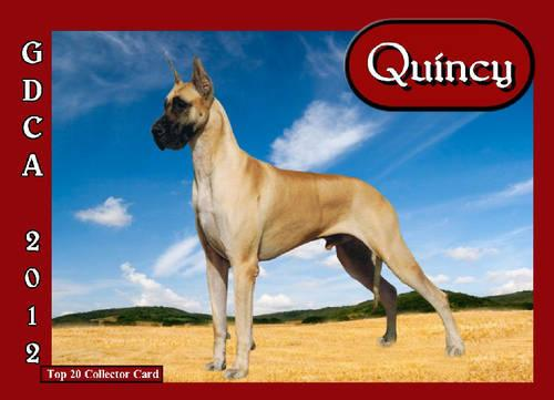 Great Dane AKC Puppy
