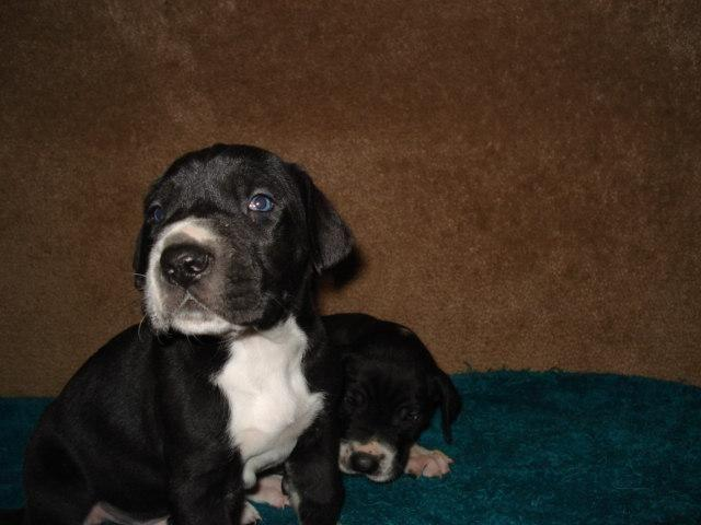 Pets And Animals For Sale In Hereford Arizona Puppy And Kitten