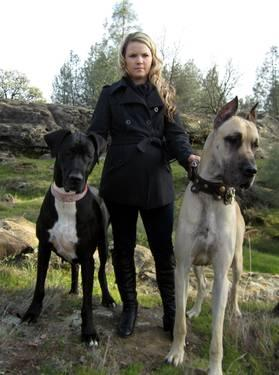 Great Dane Puppies on Great Dane Puppies   For Sale In Keswick  California Classified