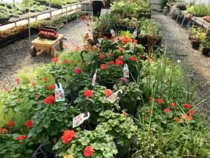 Griff's Greenhouse - $1 (Lancaster, SC)