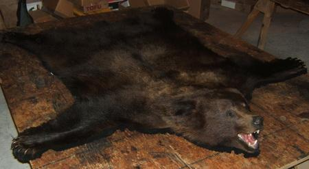 Grizzly Bear Full Head Rug Open Mouth Squares For Sale In