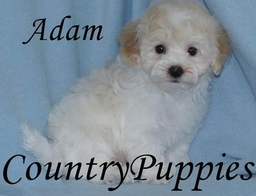 Pets And Animals For Sale In Jolley Iowa Puppy And Kitten