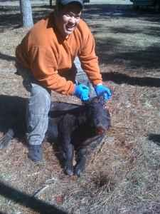 Hog Hunts - $100 (Perry )