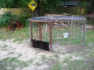 Hog Trap Atlana For Sale In Texarkana Texas