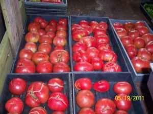 HOME GROWN HEIRLOOM TOMATOES - $2 (19855 SE HWY 42