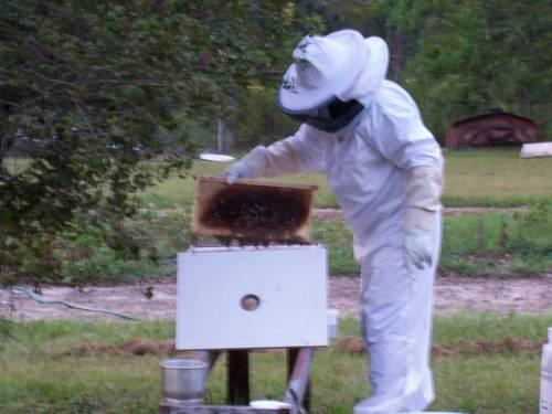 Honey Bee Hives for 2013 for Sale in Keystone Heights ... - photo#13
