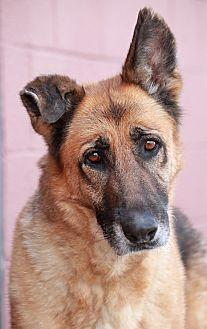 Hope von Hahn German Shepherd Dog Senior Female