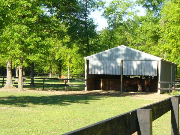 Horse Boarding on Camden Hunt Country - $400 (Camden,