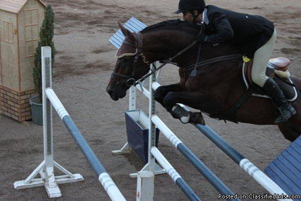 Horse Trainer for all level jumpers