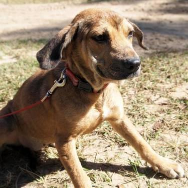 Hound - Lolita - Medium - Young - Female - Dog