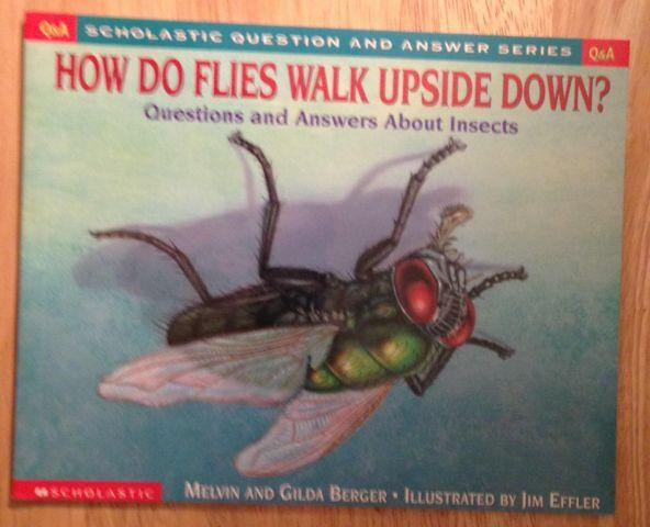 How Do Flies Walk Upside Down: Questions and Answers