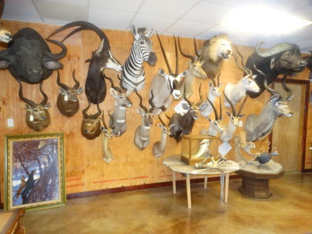 Huge One Day Taxidermy & Trophy Room Decor Auction