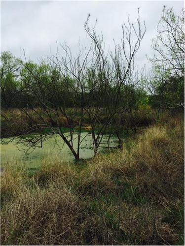 Hunt on this small ranch in Texas